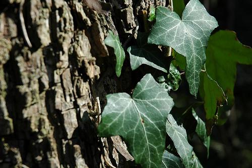 Wohnzimmer Palme Pflege : ... pflege leicht. Spathiphyllum ist den ...