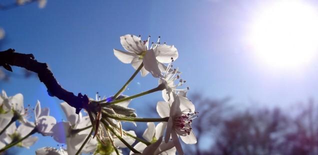 Die Heilkraft der Sonne: Vitamin-D als Lebenselixier